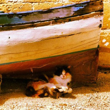 'Chillaxing' cat, Gozo © Gail Simmons