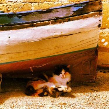'Chillaxing' cat, Gozo © Gail Simmons